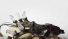 Black Deer 01