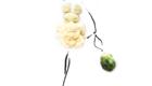 cauliflower dress