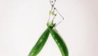 green bean dress